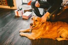 El golden retriever, Labrador miente al lado de los pies del dueño un varón mano del hombre que frota ligeramente el perro Dentro Fotos de archivo