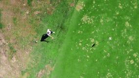 El golfista de sexo masculino juega en un campo, usando un club del metal metrajes