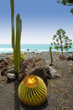 El Golfo in Lanzarote cactus at Atlantic shore Royalty Free Stock Photo