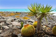 El Golfo in Lanzarote cactus at Atlantic shore Royalty Free Stock Photography
