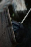 El gorila en hamaca sombría de la cuerda rasguña la cabeza Foto de archivo