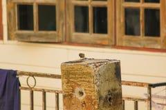 El gorrión se coloca en el extremo del polo concreto fotos de archivo