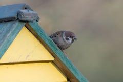 El gorrión se sienta en el tejado Foto de archivo libre de regalías