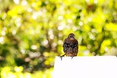 El gorrión se sienta en una rama y canta canciones fotos de archivo libres de regalías