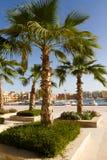 el gouna marina palmy Zdjęcia Royalty Free