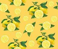 El gran ejemplo del limón amarillo hermoso da fruto en un fondo anaranjado Dibujo del color de agua del limón Modelo inconsútil Fotos de archivo