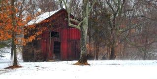 El granero rojo en la nieve de niebla con los árboles que comen la naranja brillante se va Imagen de archivo libre de regalías
