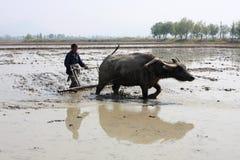 El granjero chino está arando Imagenes de archivo