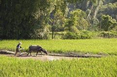 El granjero chino y su el búfalo que trabajan en un arroz colocan Imagen de archivo