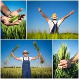 El granjero coloca el collage Foto de archivo