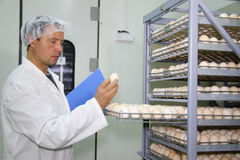 El granjero controla los huevos del pollo Imagen de archivo libre de regalías