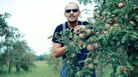 El granjero de Apple examina manzanas en una rama de árbol almacen de video