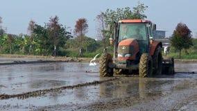El granjero de la cámara lenta con los campos del arroz de la cosecha de la máquina de la máquina segador con los pájaros vuela metrajes