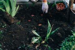 El granjero de la mujer toma el cuidado de las plantas en la plantación farming foto de archivo libre de regalías