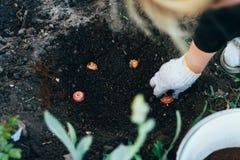 El granjero de la mujer toma el cuidado de las plantas en la plantación farming añada el fertilizante imagen de archivo