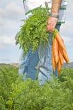 El granjero de la zanahoria Fotografía de archivo libre de regalías
