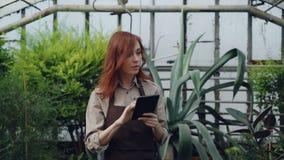El granjero de sexo femenino joven está caminando en invernadero, está comprobando las plantas y está utilizando la tableta mient metrajes