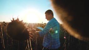 El granjero del hombre con forma de vida de la tableta en el campo de los trabajos del girasol va tierra de los paseos del suelo  almacen de video