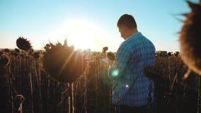 El granjero del hombre con la tableta de la forma de vida en el campo de los trabajos del girasol va tierra de los paseos del sue almacen de video