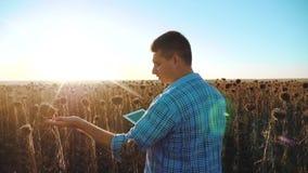 El granjero del hombre con la tableta en el campo de la forma de vida de los trabajos del girasol va tierra de los paseos del sue almacen de metraje de vídeo