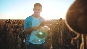 El granjero del hombre con la tableta en el campo de los trabajos del girasol va tierra de los paseos del suelo forma de vida vid almacen de metraje de vídeo