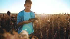 El granjero del hombre con la tableta en el campo de los trabajos del girasol va tierra de los paseos del suelo el steadicam el v almacen de metraje de vídeo
