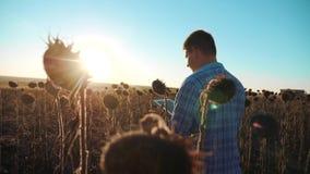El granjero del hombre con la tableta en el campo de los trabajos del girasol va tierra de los paseos del suelo Vídeo de la cámar almacen de metraje de vídeo