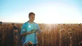 El granjero del hombre con la tableta en el campo de los trabajos del girasol va tierra de los paseos del suelo Vídeo de movimien almacen de metraje de vídeo