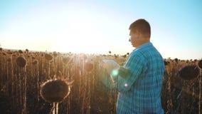 El granjero del hombre con la tableta en la forma de vida del campo de los trabajos del girasol va tierra de los paseos del suelo almacen de video