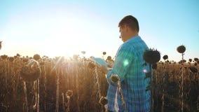 El granjero del hombre con la tableta en los trabajos del girasol que va el campo suelo de la forma de vida camina la tierra Víde almacen de metraje de vídeo
