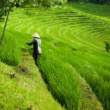 El granjero en el arroz coloca, las terrazas hermosas del arroz en Bali Fotografía de archivo