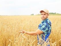 El granjero en una camisa de tela escocesa controló su campo Muestra el trigo h Imagen de archivo libre de regalías