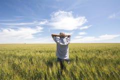 El granjero está mirando la calidad del trigo de la cosecha Imagen de archivo libre de regalías