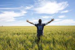 El granjero está mirando la calidad del trigo de la cosecha Fotografía de archivo