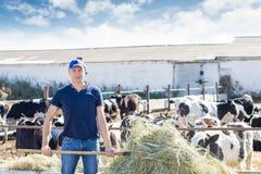 El granjero está trabajando en granja con las vacas lecheras Imágenes de archivo libres de regalías