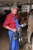 El granjero está trabajando con las vacas lecheras Imagenes de archivo