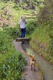 El granjero local camina a lo largo de un canal de la irrigación Imágenes de archivo libres de regalías