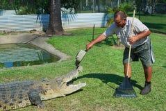 El granjero Mick Tabone del cocodrilo juega con el reptil mantenido detrás de la cerca en Australia el río de Jonston, Australia Imagen de archivo