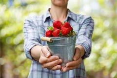 El granjero muestra un cubo por completo de fresas foto de archivo libre de regalías