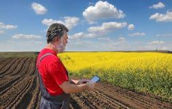 El granjero o el agrónomo examina el campo floreciente de la rabina fotografía de archivo