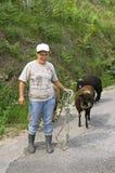 El granjero portugués de la mujer trae ovejas de nuevo a granja Fotografía de archivo