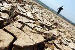 El granjero que camina entre el suelo deseca debido a un droug prolongado imagen de archivo libre de regalías