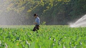 El granjero que usa demostraciones digitales de la tableta gesticula sí durante la supervisión de su plantación almacen de video