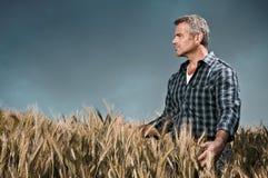 El granjero tiene cuidado de su campo de trigo Imágenes de archivo libres de regalías