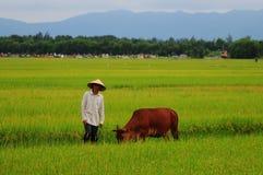 El granjero y la vaca Fotos de archivo libres de regalías