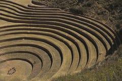 El grano circunda Perú Imagenes de archivo