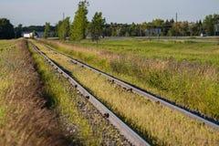 El grano crece entre las vías del tren fotografía de archivo