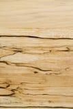 El grano de madera de abedul con obscuridad raya el primer Fotografía de archivo libre de regalías
