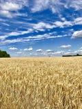 El grano del árbol del cielo del prado se nubla amarillo azul imagen de archivo libre de regalías