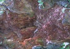 El gris empañó el fondo abstracto/el fondo abstracto gris contexto suave del fondo del extracto de la naturaleza utilizado para e Fotografía de archivo